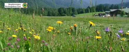 Streuobstwiese Bischofswiesen mit Bienenhotel