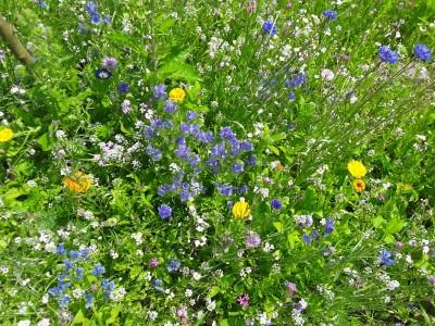 Blumen auf der Streuobstwiese Bischofswiesen