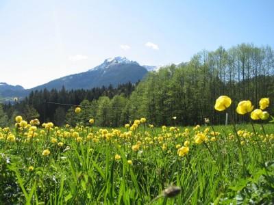 Blühendes Kalkflachmoor am Aschauerweiher