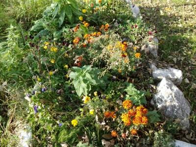 Herbstblumen Streuobstwiese Bischofswiesen