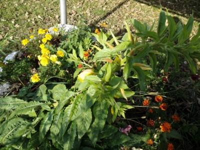 Herbstpflanzen auf der Streuobstwiese Bischofswiesen