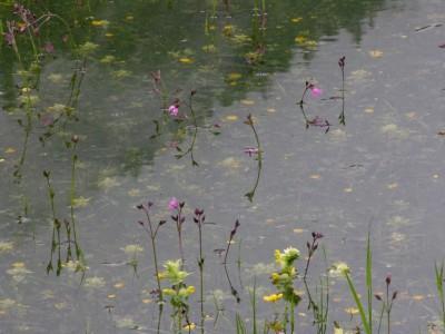 Das Hallthurmer Moos in Bischofswiesen gehört zur Biosphärenregion Berchtesgaden