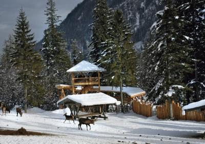 Kutschfahrt zur Wildfütterung im Nationalpark Berchtesgaden