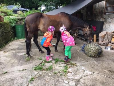 Unsere Pferde werden gut versorgt. Familienurlaub in Bischofswiesen im Berchtesgadener Land