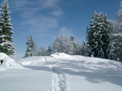 Schneeschuh Winterlandschaft