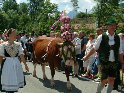 Almabtrieb von der Schwarzbachalm nach Bischofswiesen